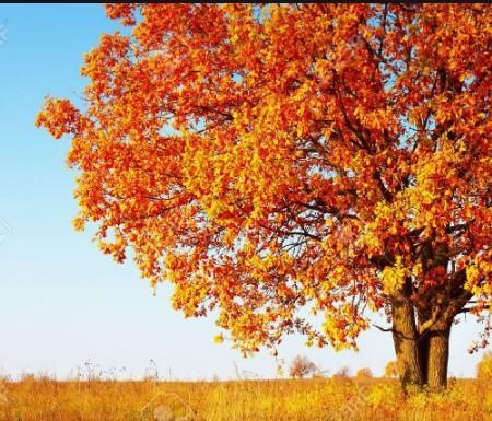 L'automne nous accueille avec ses couleurs fauves et ses odeurs de champignons..